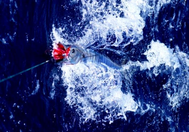 Sport fishing trip Los Gigantes