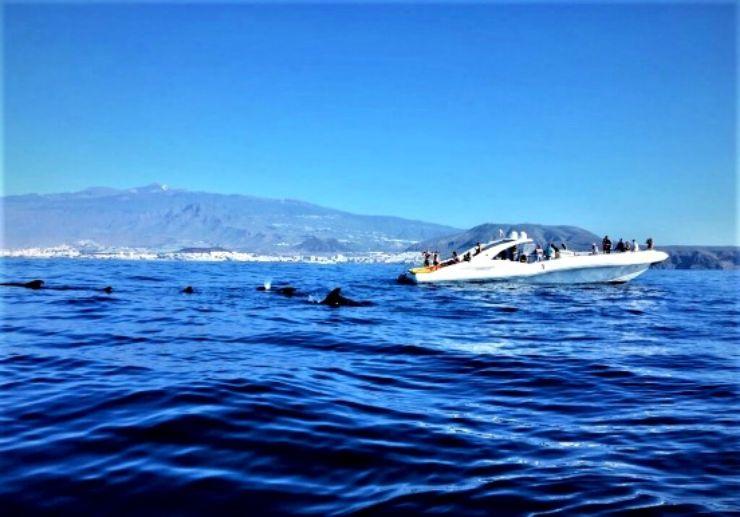 Amazing boat trip Tenerife spot whales