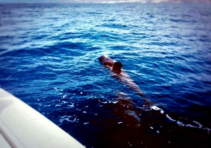 Spot whale while on boat trips in Tenerife