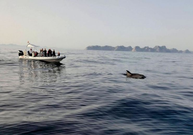 Dolphin spotting Mallorca