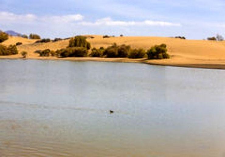 The oasis of Mapalomas