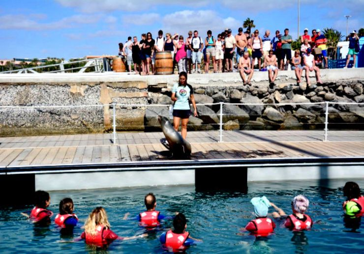 Sea lion experience Fuerteventura