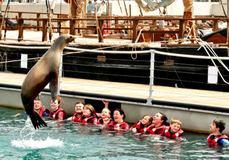 Sea lion leaping onto the air