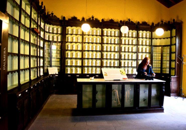 Museum of Medicine Plants Tejeda