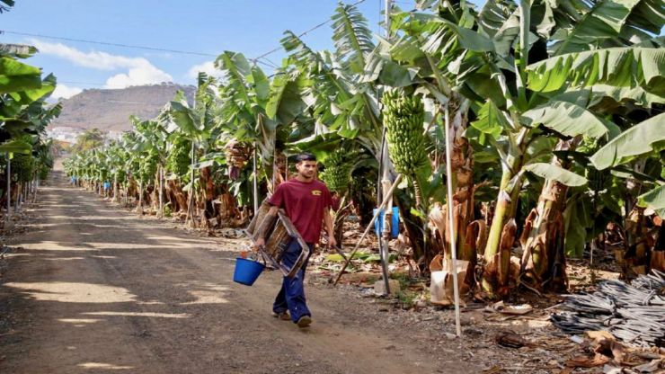 ride past banana plantation electric bike tour