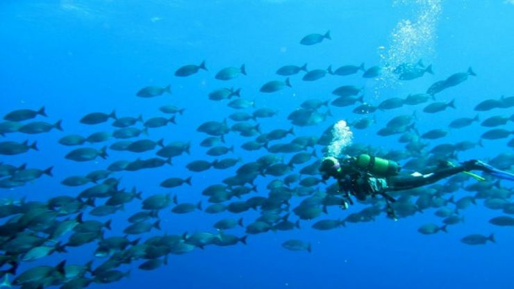 Diving with group of fishing in el hierro