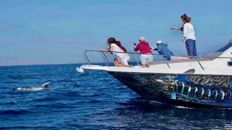 Dolphin spotted on fishing trip Isla lobos