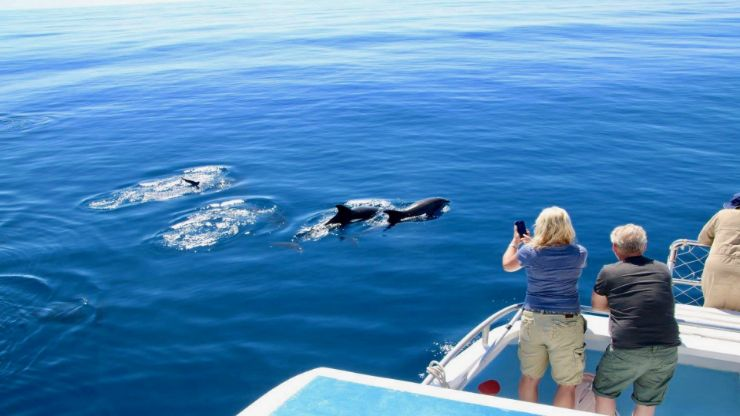 Dolphin and whale watching Morro Jable