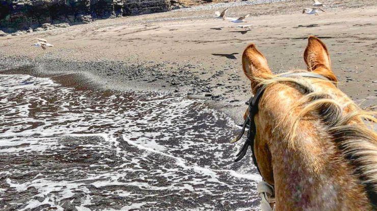 Horse riding Tour Lanzarote El Pozo beach