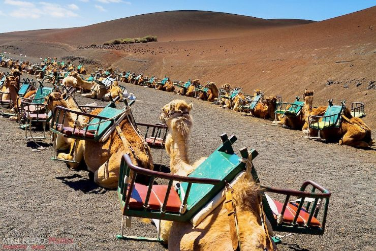 Camel riding at foot hill of Fire Mountain near Timanfaya